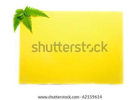 Fern on yellow background