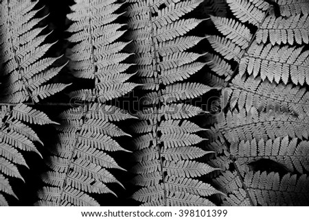 Fern pattern, black and white - stock photo