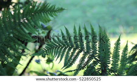 fern silhouetted against the countryside