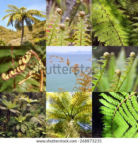 Fern square collage, New Zealand symbol - stock photo