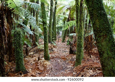 Fern trees in tropical jungle - stock photo