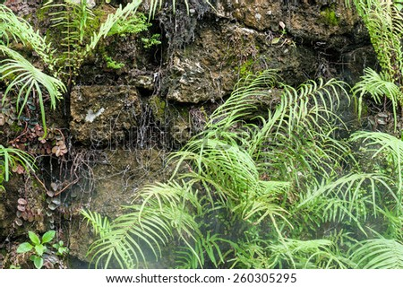 Fern with stone in  Rainforest . - stock photo