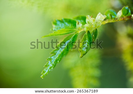 ferns - stock photo