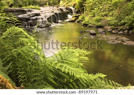 Ferns along a creek bank with a waterfall in the back ground. Location is Sweet creek falls near Mapleton,Or. - stock photo