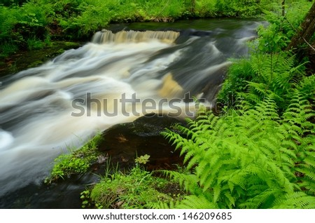 Ferns by Wolf Creek, Banning State Park in Minnesota - stock photo