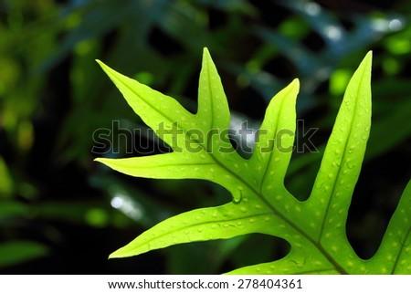Ferns - closeup. - stock photo