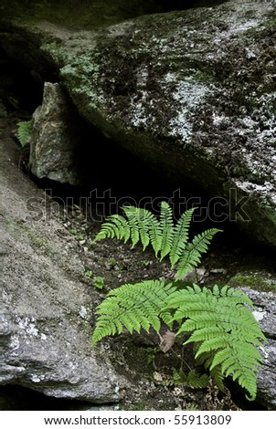 ferns growing on a rocky ledge - stock photo