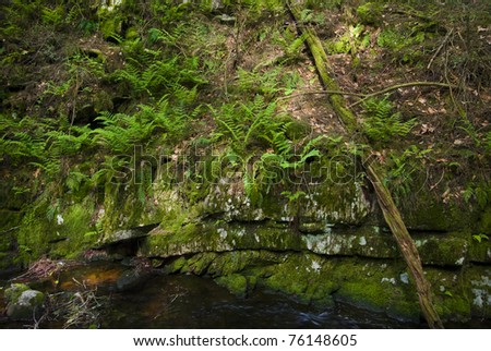 Ferns growing on a rocky wall of Stokes State Forest in Northwest New Jersey.