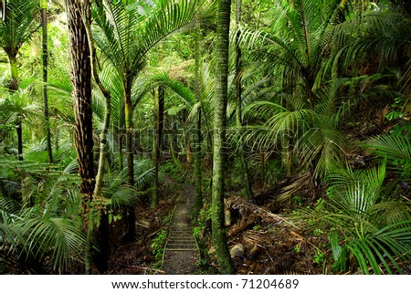 Ferns in lush tropical forest - stock photo