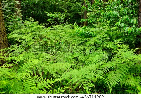 Ferns in the shade of a tree