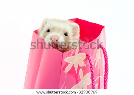 Ferret as a gift - stock photo