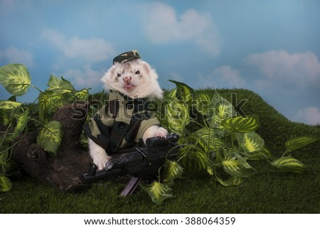 ferret in a suit sits in a trench war - stock photo