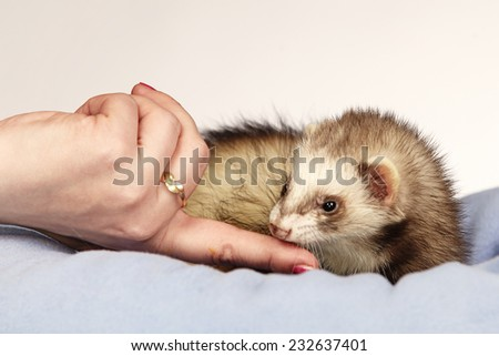 Ferret loving people