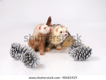 Ferret tongue and cones - stock photo