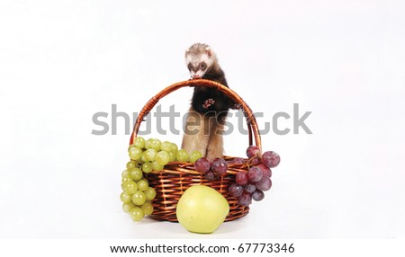 Ferret with a autumn crop. Green apple and grapes. - stock photo