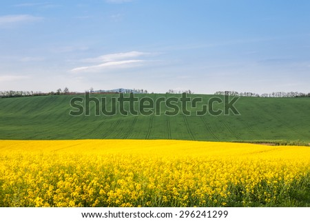 Fertile fields with strip lines from operation of agricultural machines - stock photo