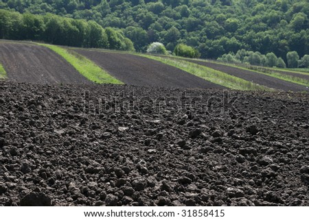 Fertile soil - stock photo