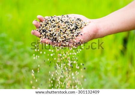 fertilizer,farmer hand pouring plant chemical fertilizer over green background - stock photo