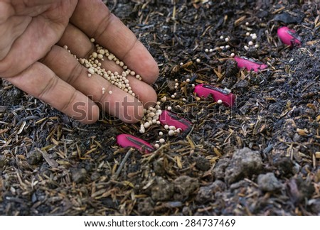 Fertilizer, Soil, Male hand giving plant fertilizer on ground - stock photo