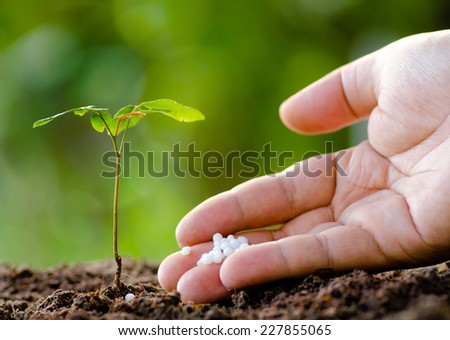 Fertilizer,Urea,Planting,Male hand giving plant fertilizer to young tree - stock photo
