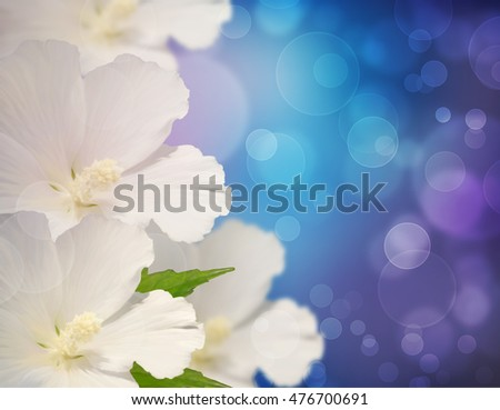 Festive collage with white flowers on a blue background