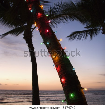 Lights Of Christmas At Warm Beach