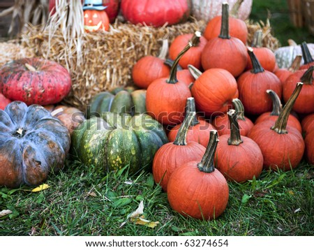 Festive holiday pumpkins and gourds set up on display for Halloween and Thanksgiving. - stock photo