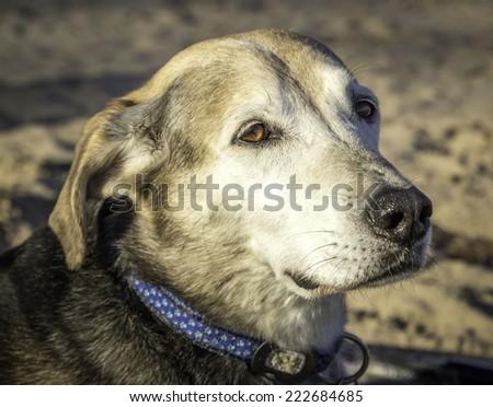 Fetch on the Beach - stock photo