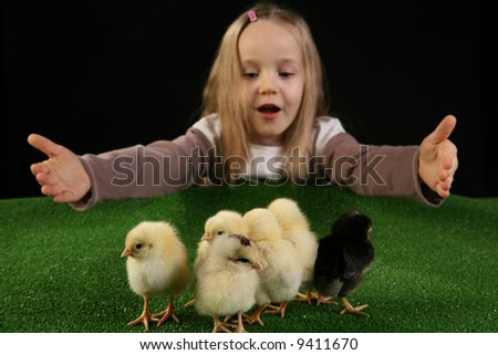 Few baby chickens and five years old girl playing with them over black background - studio shot. - stock photo
