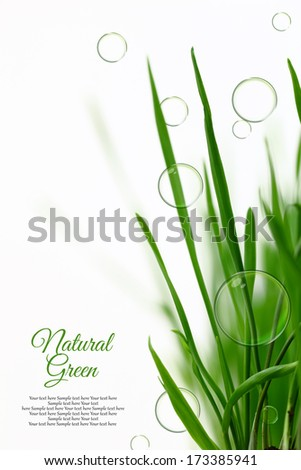 Few blades of grass with floating soap bubbles isolated - stock photo