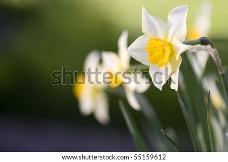 Few flowers with space for text - stock photo