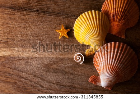 Few marine items in beautiful composition on a wooden  background. - stock photo