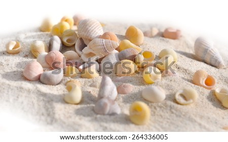 few small shells in the sand on white background - stock photo