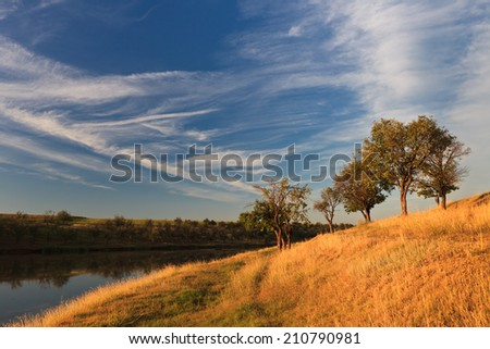 few trees on the edge of a lake