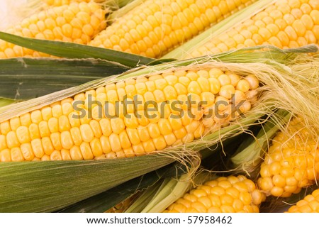 Few yellow corn - stock photo