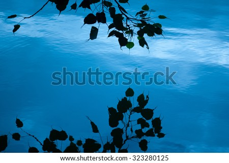 Ficus religiosa leaves silhouette reflection in the water early morning,Tilyar Lake, Rohtak, Haryana, India, South East Asia.