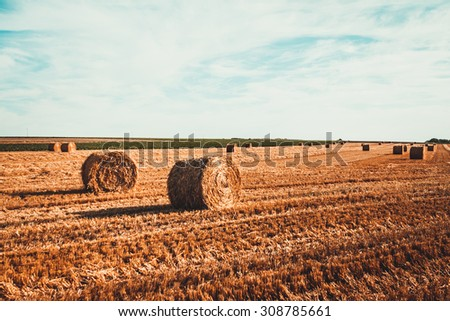 Field after Harvest Straw. Sheaves - stock photo