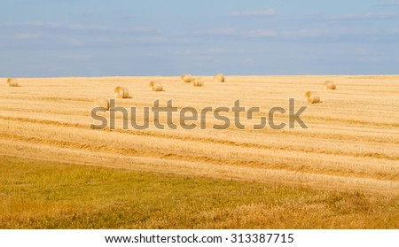 Field after harvesting can be used as background