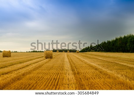 Field after harvesting. The harvest is collected. - stock photo