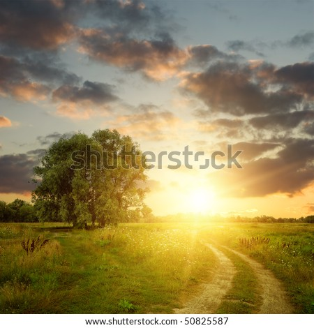 Field and dirt road to sunset. Summer landscape - stock photo