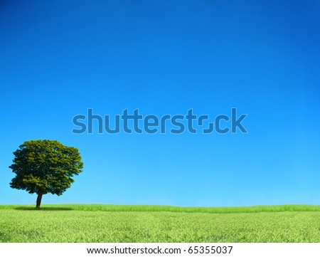 field and lonely tree, cloudless sky in background - stock photo