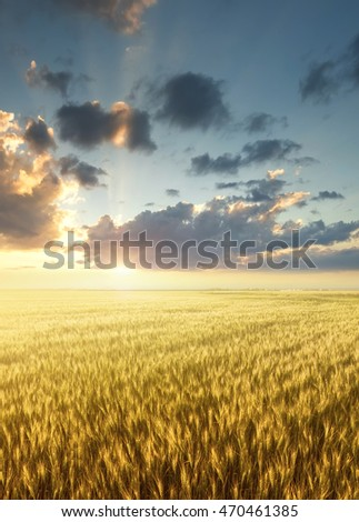 Field and sky during sunrise. Agricultural landscape in the summer time