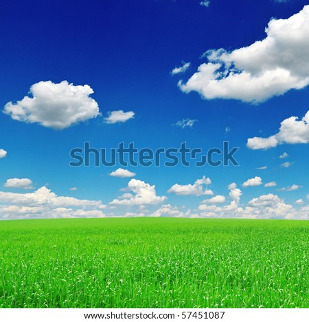 field and the blue sky - stock photo