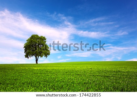 Field and tree and blue sky - stock photo