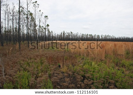 field and trees - stock photo