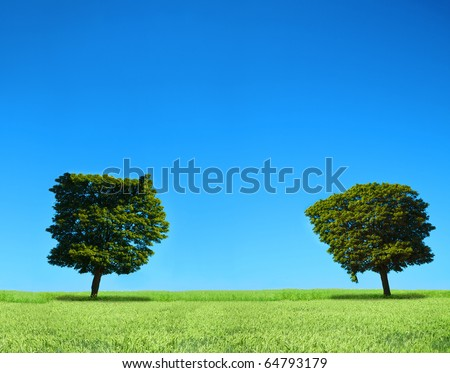 field and two trees, cloudless sky in background