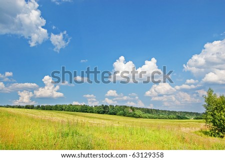 Field and wood - stock photo
