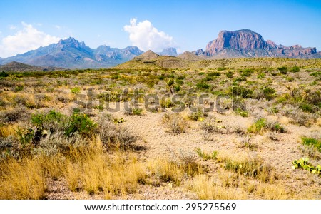 Field at Big Bend National Park - stock photo