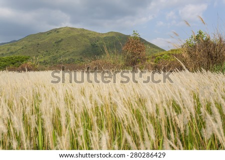 Field at sunny day - stock photo