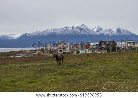 Field city view with the horse, houses and snow mountain on the background, in the end of the world, Ushuaia, Argentina.